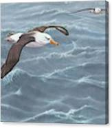 Ocean Flight Seabirds By Alan M Hunt Canvas Print