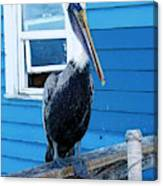 Oceanside Pelican Right  Canvas Print
