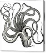 Octopus Octopus Vulgaris - Vintage Canvas Print
