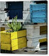 Old Pallet Painted White, Blue And Yellow Used As Flower Pot Canvas Print
