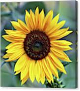 One Bright Sunflower Canvas Print