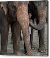 One Man, Two Elephants Canvas Print