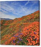Oodles Of Poppies Fill The Walker Canyon Of Lake Elsinore, Calif Canvas Print