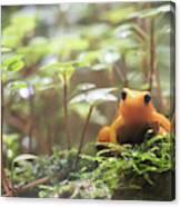 Orange Frog. Canvas Print