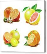 Orange Grapefruit Lemon Watercolor Fruit Illustration Canvas Print