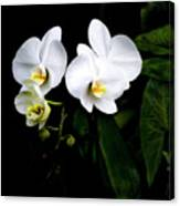 Orchids And Leaves Canvas Print