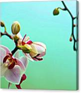 Orchids Out For A Breath Of Fresh Air Canvas Print