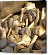 Organic Garlic Canvas Print