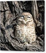Owl In A Tree Canvas Print