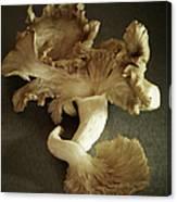 Oyster Mushrooms Still Life Canvas Print