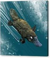 P Is For Platypus Canvas Print
