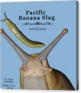 Pacific Banana Slug Canvas Print