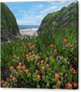 Paintbrush And Ice Plant, Garrapata Canvas Print