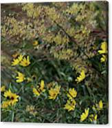 Painted Fall Flowers Canvas Print