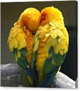 Pair Lovebirds Canvas Print
