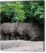 Pair Of Rhinos Standing In The Shade Of Trees Canvas Print