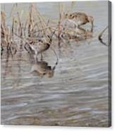 Pair Of Snipe By Alan M Hunt Canvas Print