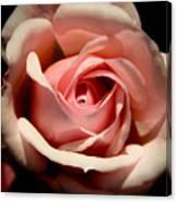 Pale Pink Rose Canvas Print