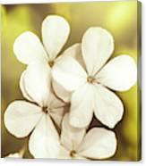 Pale Wildflowers Canvas Print