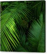 Palm Saturday Canvas Print