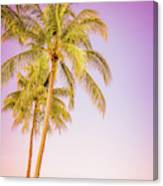 Palm Trees And Pink Sky Canvas Print