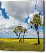 Palm Trees In The Field Of Coreopsis Canvas Print