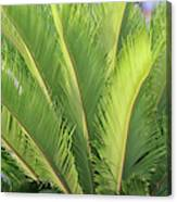 Palms Up Canvas Print