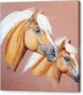 Palomino Pair Canvas Print