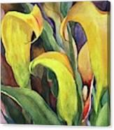 Peeking Lily Canvas Print