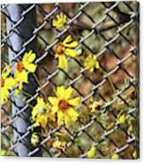 Phoenix Arizona Papago Park Blue Sky Red Rocks Scrub Vegetation Yellow Flowers 3182019 5327 Canvas Print