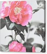 Pink Camellia. Shabby Chic Collection Canvas Print