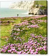 Pink Coastal Path Canvas Print