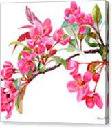 Pink Flowering Tree Blossoms Canvas Print