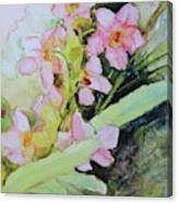 Pink Moth Orchids II Canvas Print