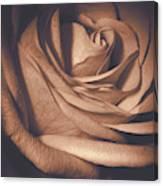 Pink Rose Petals 0219 Canvas Print