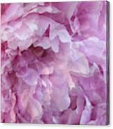 Pinkity Canvas Print