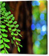 Plants, Trees And Flowers Canvas Print