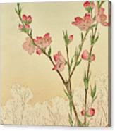 Plum Or Cherry Blossom Canvas Print