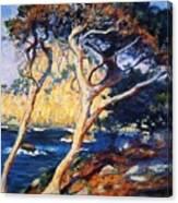 Point Lobos Trees 1919 Canvas Print