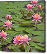 Pond Decor Canvas Print