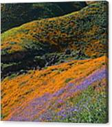 Poppies Bluebells And Rolling Hills Canvas Print