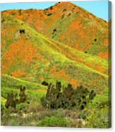 Poppy Hills And Gullies Canvas Print