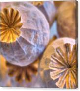 Poppy Seed Pods 2 Canvas Print