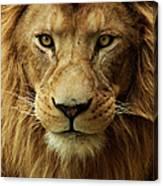 Portrait Male African Lion Canvas Print