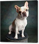 Portrait Of A French Bulldog Canvas Print