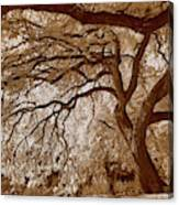 Portrait Of A Tree In Infrared Canvas Print