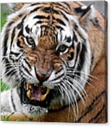 Portrait Of An Aggressive Bengal Tiger Canvas Print