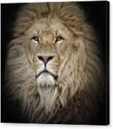 Portrait Of Lion Against Black Canvas Print