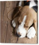 Portrait Of Young Beagle Dog Lying On Canvas Print
