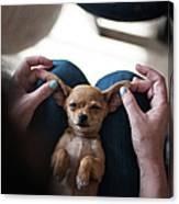 Pov - Pets Canvas Print